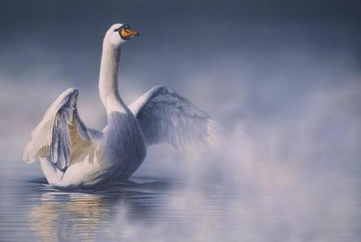 http://www.davidkitler.com/images/Mute_Swan.jpg