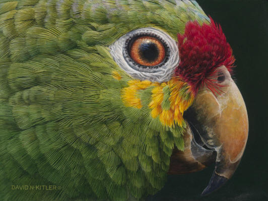 Birds Oil Painting Images